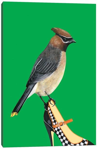 Cedar Waxwing Bird On Shoe Canvas Art Print