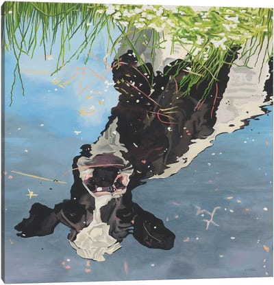 Cow Reflection Canvas Art Print