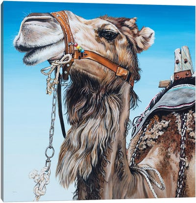 Dromedary Canvas Art Print