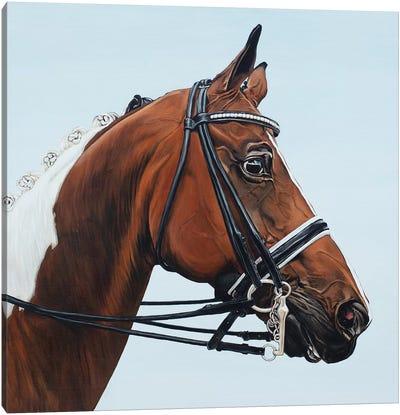 Horse Tabiano Canvas Art Print