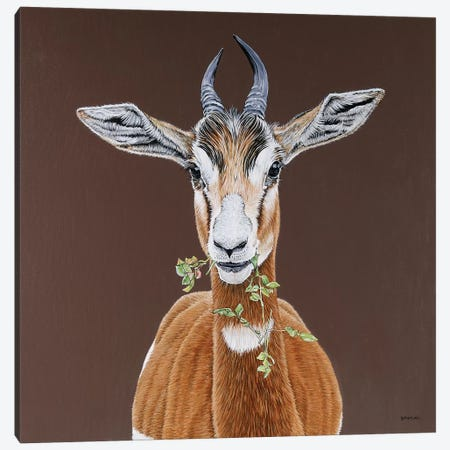 Mhorr Gazelle Canvas Print #BTN21} by Clara Bastian Canvas Print