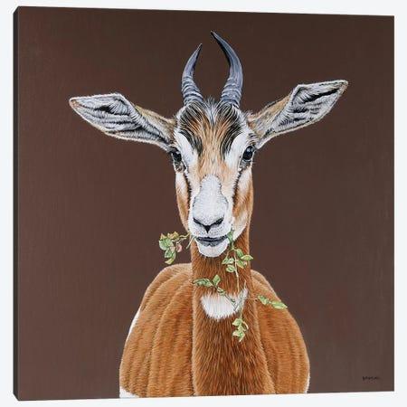 Mhorr Gazelle Canvas Print #BTN21} by Clara Bastian Canvas Print