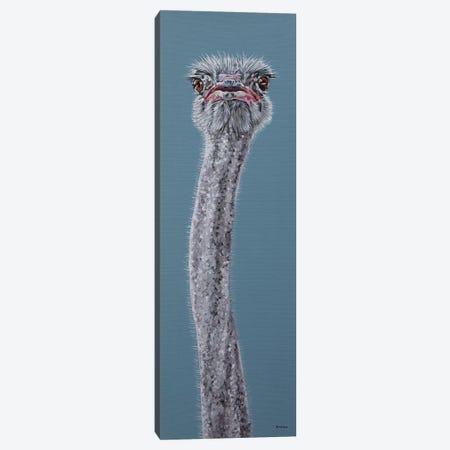 Ostrich Canvas Print #BTN30} by Clara Bastian Canvas Wall Art