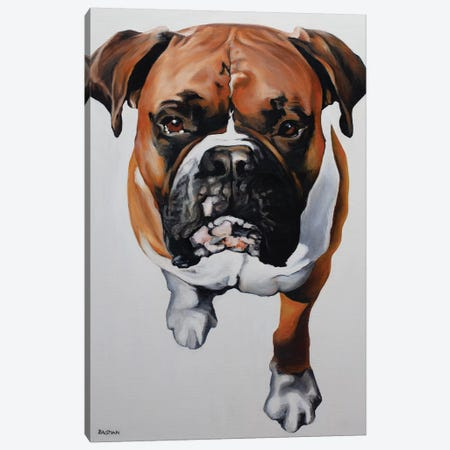 Boxer Canvas Print #BTN3} by Clara Bastian Canvas Artwork