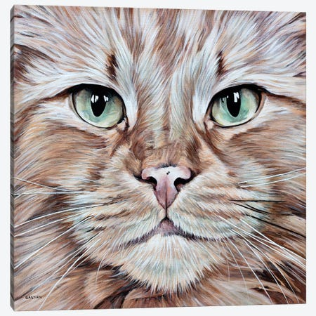 Tommy Canvas Print #BTN40} by Clara Bastian Art Print