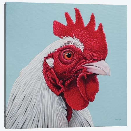 White Rooster Canvas Print #BTN42} by Clara Bastian Canvas Art Print