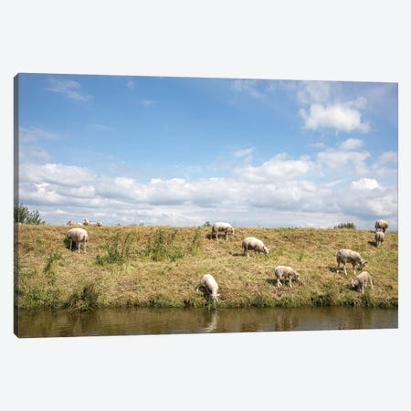 Grazing Sheep Canvas Print #BTN43} by Clara Bastian Art Print