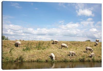Grazing Sheep Canvas Art Print