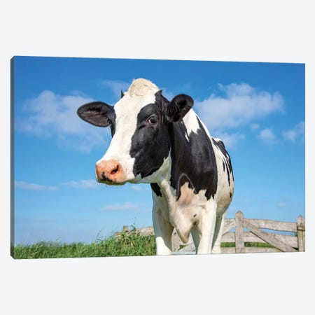 Cute Cow Canvas Print #BTN44} by Clara Bastian Canvas Art