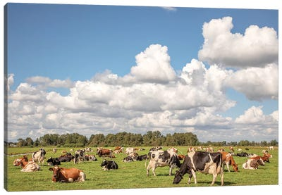 Grazing Cows In A Meadow Canvas Art Print