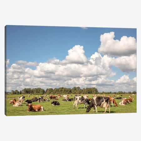 Grazing Cows In A Meadow Canvas Print #BTN45} by Clara Bastian Canvas Artwork