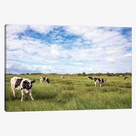 Cows In The Field Canvas Print #BTN47} by Clara Bastian Canvas Wall Art