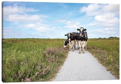 Cows On The Road Canvas Art Print