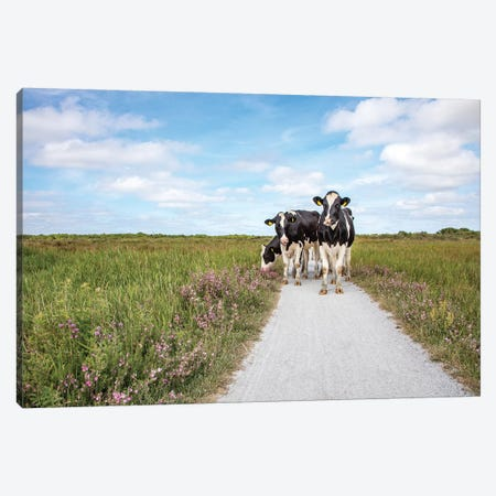 Cows On The Road Canvas Print #BTN48} by Clara Bastian Canvas Print