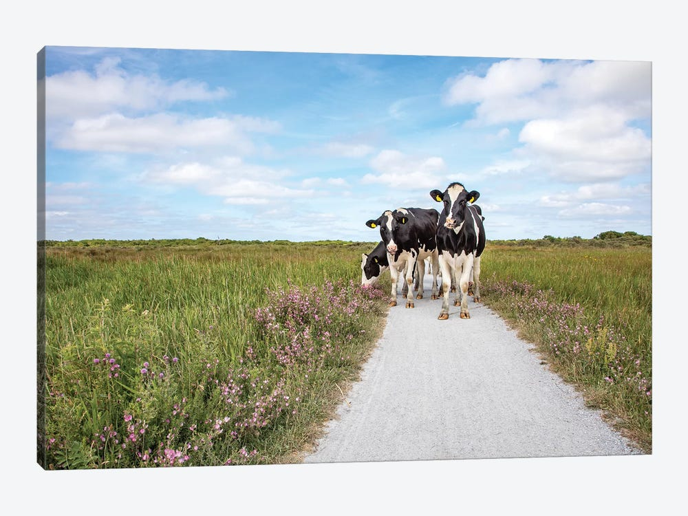 Cows On The Road by Clara Bastian 1-piece Canvas Art Print