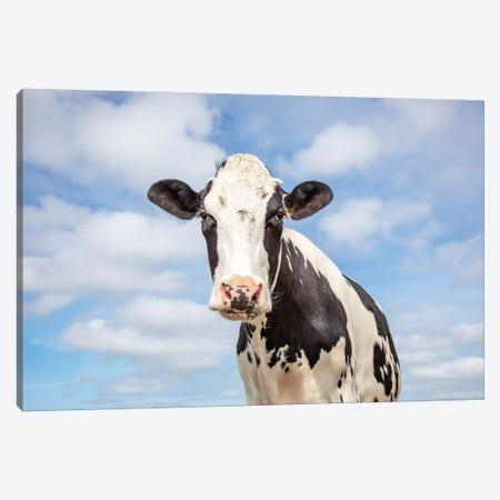 Sweet Cow Canvas Print #BTN49} by Clara Bastian Canvas Print