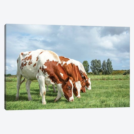 Four Cows On A Row Canvas Print #BTN51} by Clara Bastian Canvas Artwork