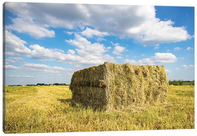 Straw in the field Canvas Art Print
