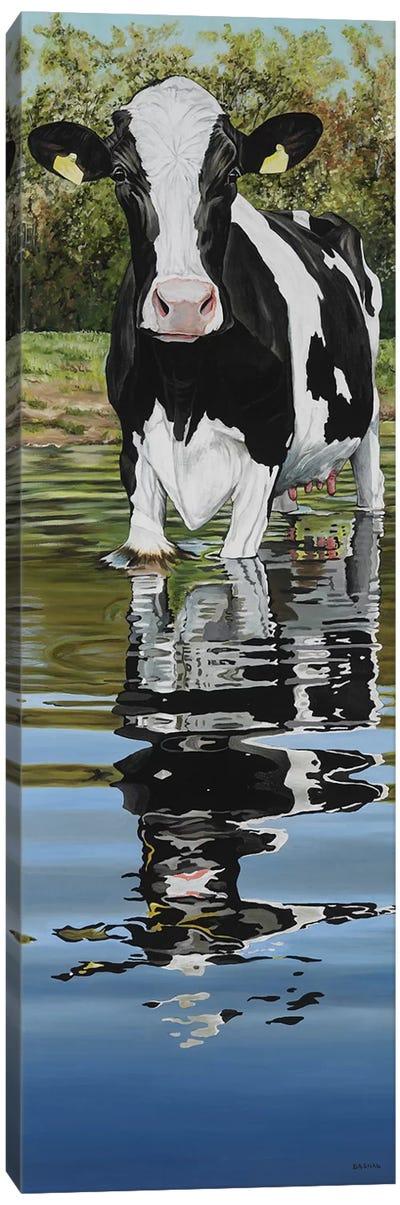 Cow In A Creek Canvas Art Print