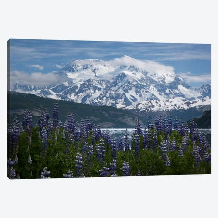 Lupine Flowers And Mount Saint Elias Rising Above Taan Fjord, Icy Bay, Wrangell-St. Elias National Park, Alaska II Canvas Print #BTR6} by Matthias Breiter Canvas Art