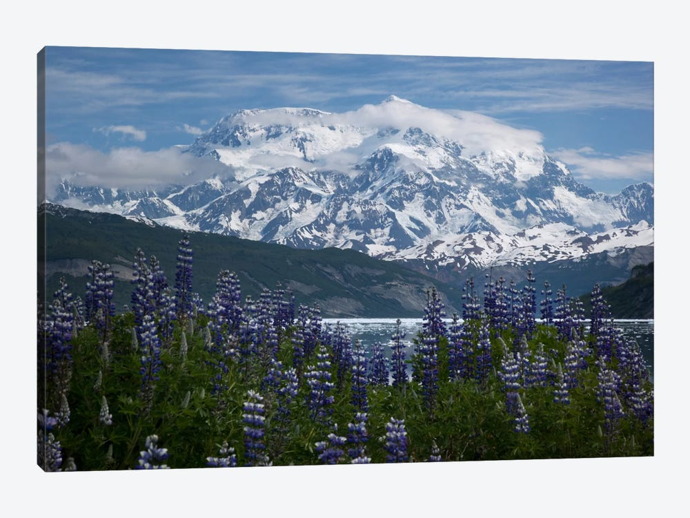 Lupine Flowers And Mount Saint Elias Rising Above Taan Fjord, Icy Bay, Wrangell-St. Elias National Park, Alaska II by Matthias Breiter 1-piece Art Print