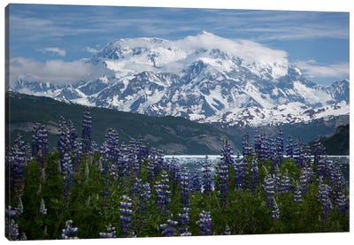 Lupine Flowers And Mount Saint Elias Rising Above Taan Fjord, Icy Bay, Wrangell-St. Elias National Park, Alaska II Canvas Art Print