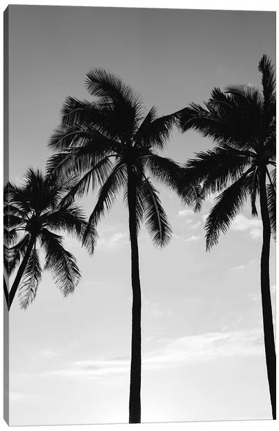 Hawaiian Palms III Canvas Art Print