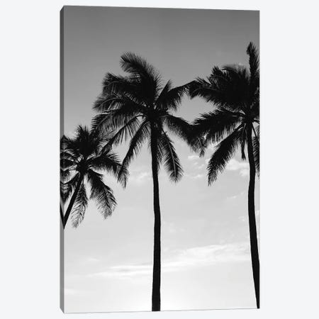Hawaiian Palms III 3-Piece Canvas #BTY108} by Bethany Young Canvas Wall Art