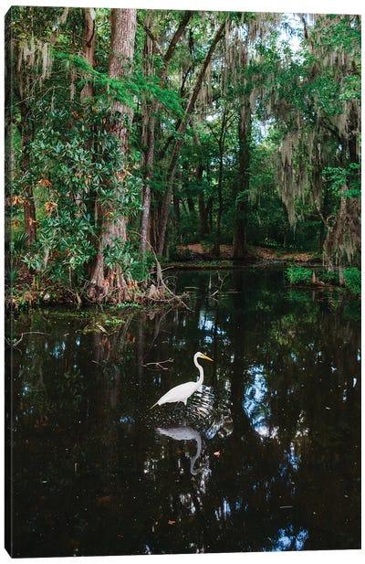 Charleston's Magnolia Plantation VI Canvas Art Print