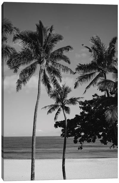Hawaiian Palms V Canvas Art Print
