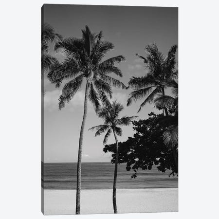 Hawaiian Palms V 3-Piece Canvas #BTY109} by Bethany Young Canvas Art