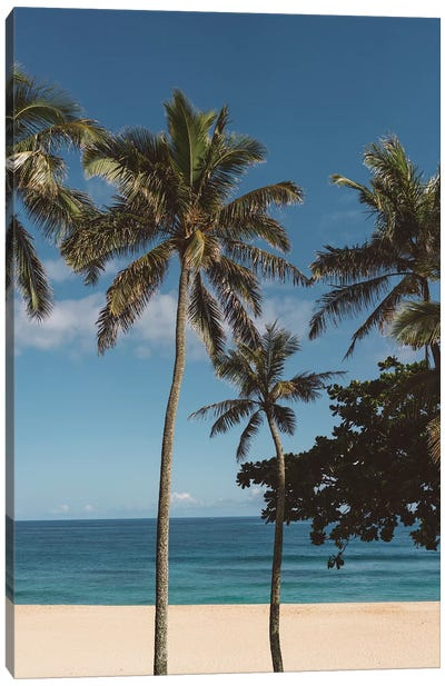 Hawaiian Palms VI Canvas Art Print