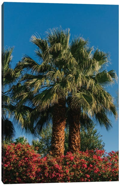Palm Springs Palms II Canvas Art Print