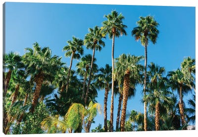 Palm Springs Palms III Canvas Art Print
