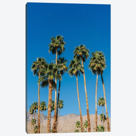 Palm Springs Palms IV Canvas Print #BTY1150} by Bethany Young Canvas Art Print