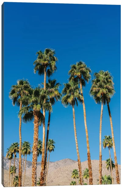 Palm Springs Palms IV Canvas Art Print