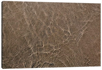 Coronado Gold Sand II Canvas Art Print
