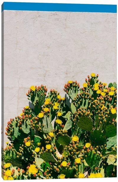 Cactus Blooms II Canvas Art Print