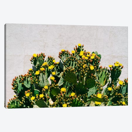 Cactus Blooms Canvas Print #BTY1181} by Bethany Young Canvas Art