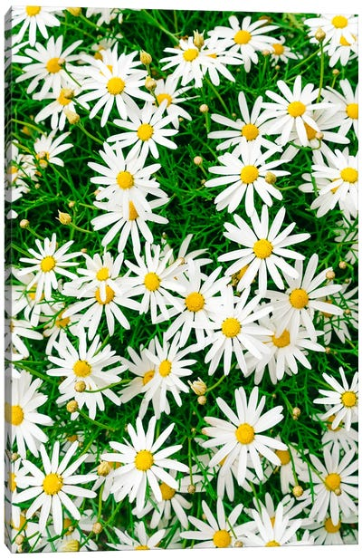 Carmel Blooms IV Canvas Art Print