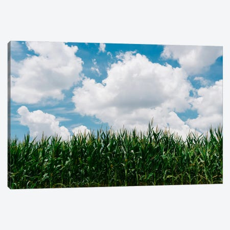 Rural Corn Fields III Canvas Print #BTY1200} by Bethany Young Art Print