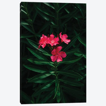 Florida Blooms Canvas Print #BTY1211} by Bethany Young Canvas Wall Art