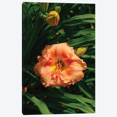 Daylily Garden II Canvas Print #BTY1366} by Bethany Young Art Print