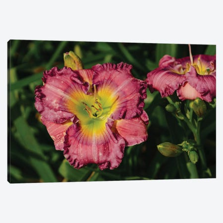Daylily Garden IX Canvas Print #BTY1369} by Bethany Young Canvas Artwork