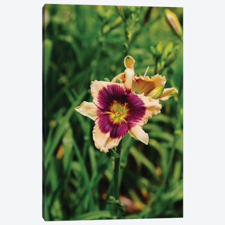 Daylily Garden V Canvas Print #BTY1370} by Bethany Young Art Print