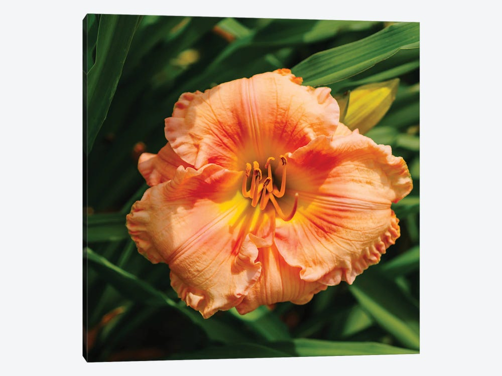 Daylily Garden VII by Bethany Young 1-piece Canvas Wall Art