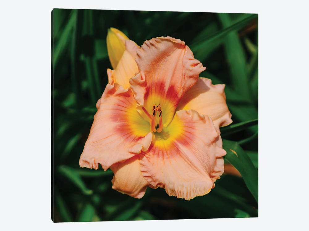 Daylily Garden X by Bethany Young 1-piece Canvas Wall Art