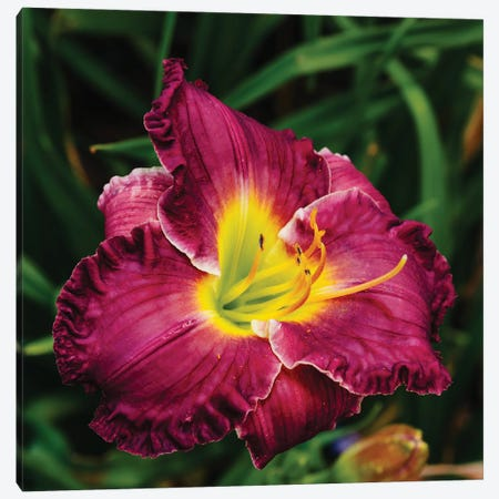 Daylily Garden XII Canvas Print #BTY1376} by Bethany Young Canvas Wall Art