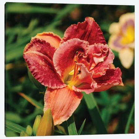 Daylily Garden Canvas Print #BTY1380} by Bethany Young Canvas Wall Art