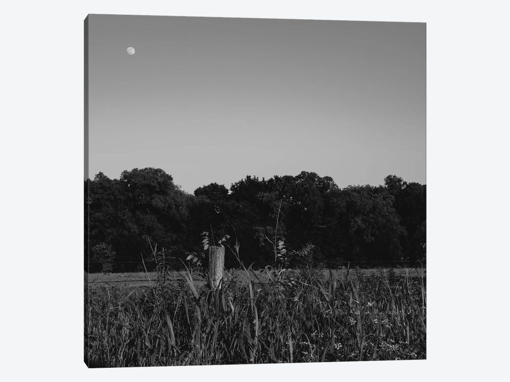 Summer Moon II by Bethany Young 1-piece Canvas Artwork